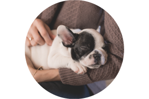 animal-salut-veterinario-barcelona-domiclio-comodidad