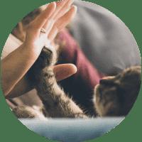 animal-salut-veterinario-domicilio-barcelona-atencio-personalitzada