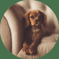 animal-salut-veterinario-domicilio-barcelona-menos-estres