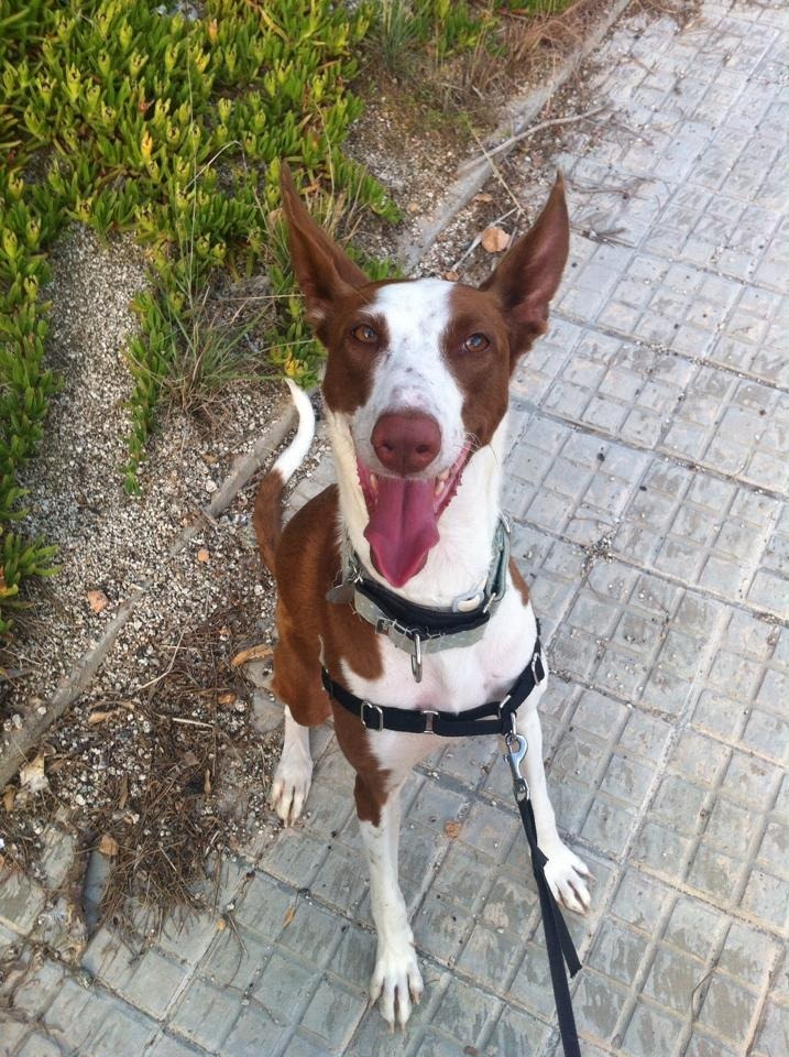 animal-salut-veterinario-domicilio