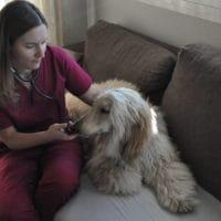 animal-salut-veterinario-domicilio-mireia-badia-enzo -3