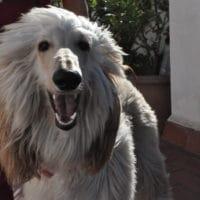 animal-salut-veterinario-domicilio-mireia-badia-enzo -4