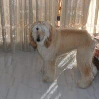 animal-salut-veterinario-domicilio-mireia-badia-enzo -5