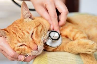 Medicina General Animal Salut - Veterinario a domicilio y centro