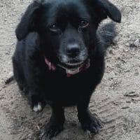 veterinario-domicilio-mireia-badia-trufa (3)
