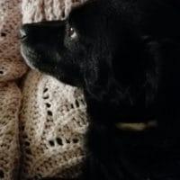 veterinario-domicilio-mireia-badia-trufa (4)