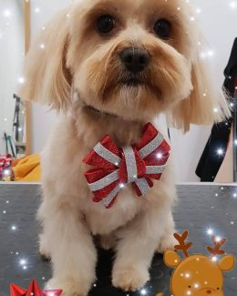 animal salut lazos navidad veterinario peluqueria (1)