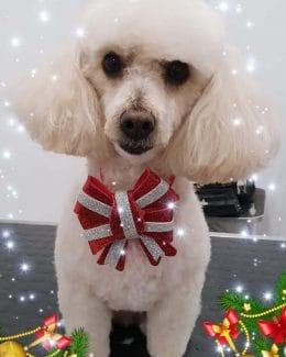 animal salut lazos navidad veterinario peluqueria (4)