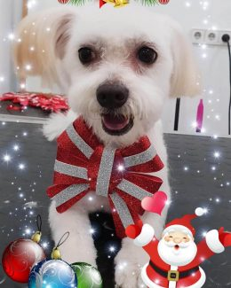 animal salut lazos navidad veterinario peluqueria (5)