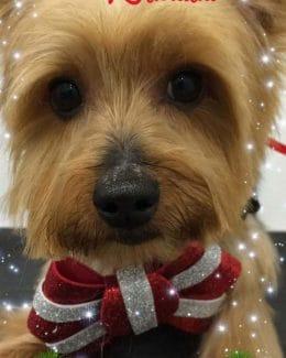 animal salut lazos navidad veterinario peluqueria (6)