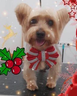 animal salut peluqueria veterinario navidad lazos (1)