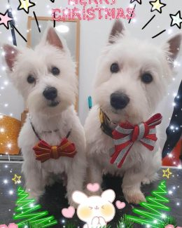 animal salut peluqueria veterinario navidad lazos (10)