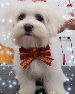 animal salut peluqueria veterinario navidad lazos (11)