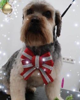 animal salut peluqueria veterinario navidad lazos (12)