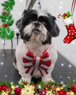 animal salut peluqueria veterinario navidad lazos (2)