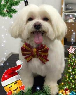 animal salut peluqueria veterinario navidad lazos (3)