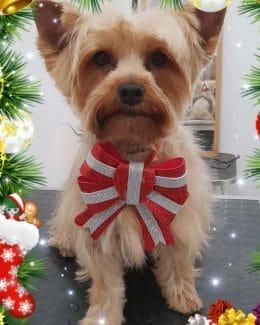 animal salut peluqueria veterinario navidad lazos (4)