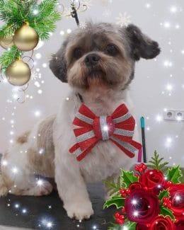 animal salut peluqueria veterinario navidad lazos (6)