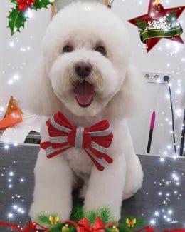 animal salut peluqueria veterinario navidad lazos (7)