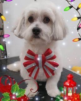 animal salut peluqueria veterinario navidad lazos (8)