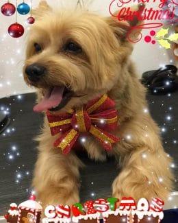 animal salut peluqueria veterinario navidad lazos (9)